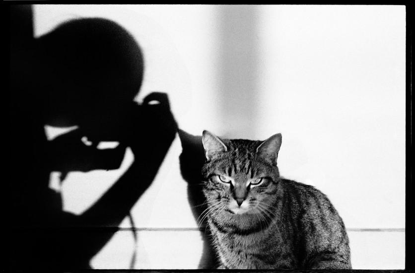 le chat et ses photographes maison europ enne de la photographie. Black Bedroom Furniture Sets. Home Design Ideas