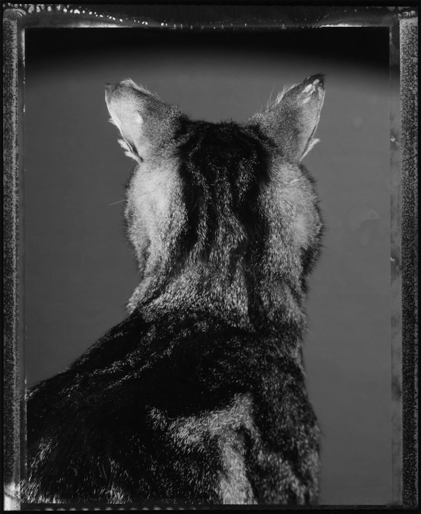Le chat et ses photographes