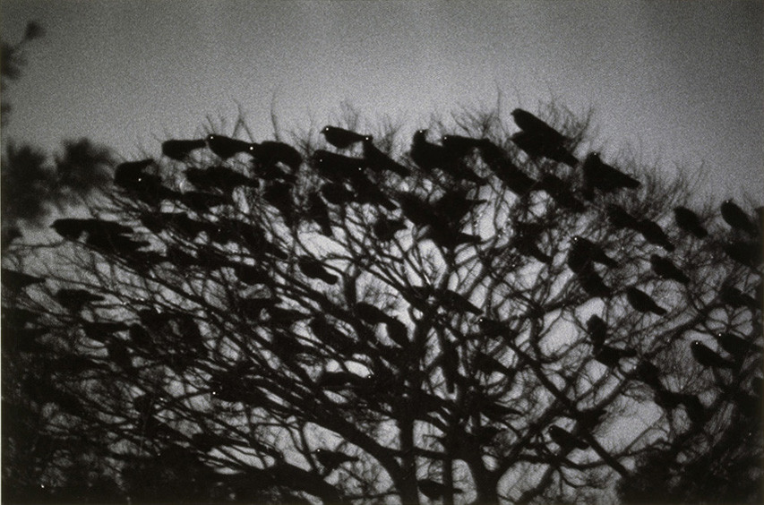 1 œuvre, 1 minute – Masahisa Fukase