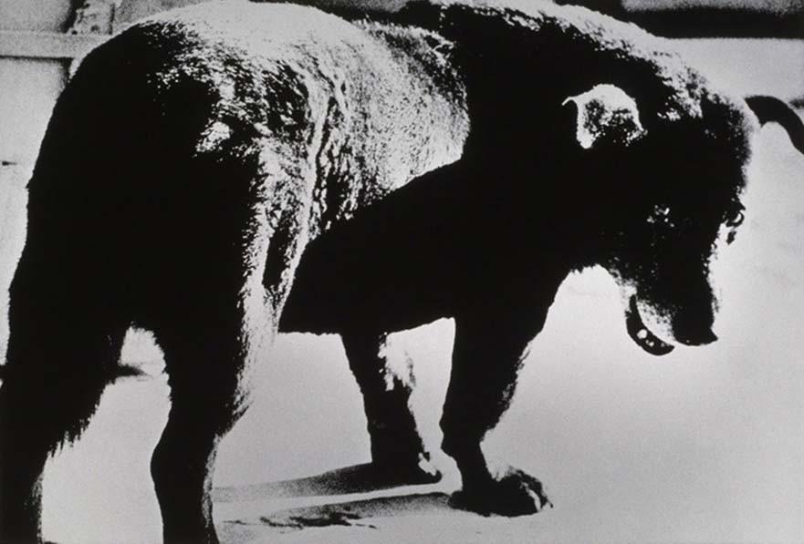 1 œuvre, 1 minute – Daido Moriyama