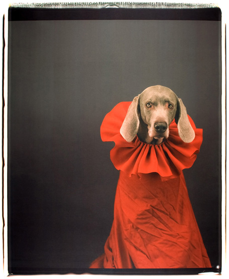 William Wegman, So Watteau, 1999 Tirage jet d'encre d'après Polaroid, 118,5 x 88 cm  © William Wegman, Don de l'Atelier Adamson (Washington)